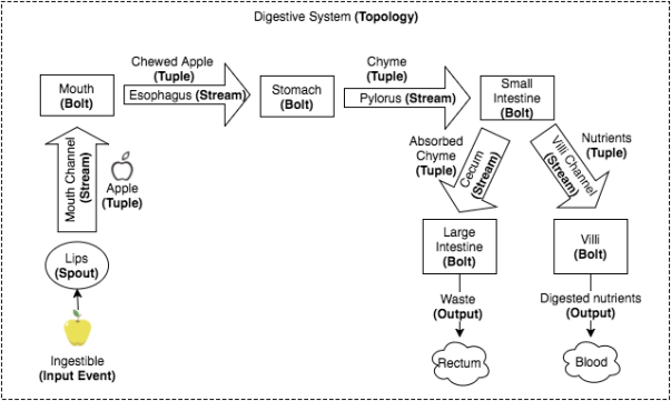 digestive_system_topology